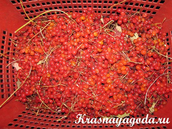Компот из яблок - рецепты с фото на Повар. ру (26) 54